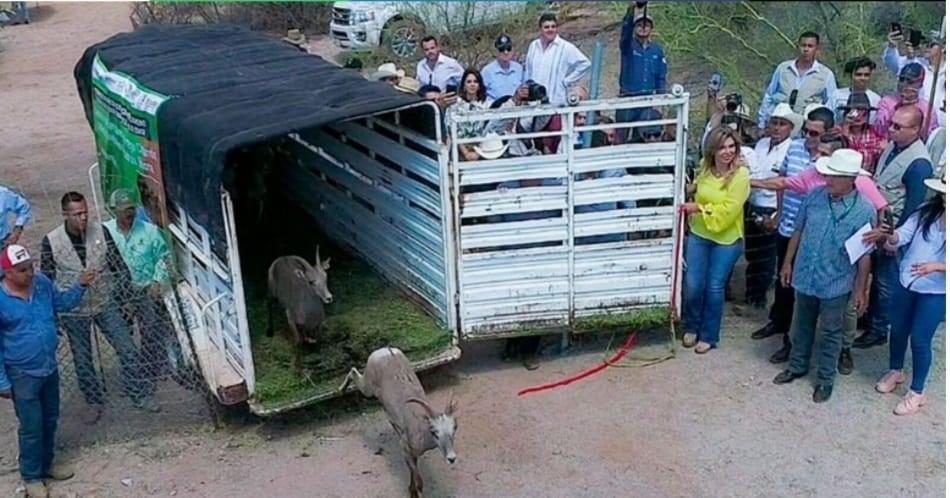 Se consolida en la administración de Claudia Pavlovich la actividad agroalimentaria en Sonora