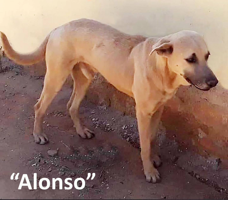 """Detienen a sujeto que hirió de muerte a """"Alonso"""", un perro al que dejo con las vísceras expuestas"""