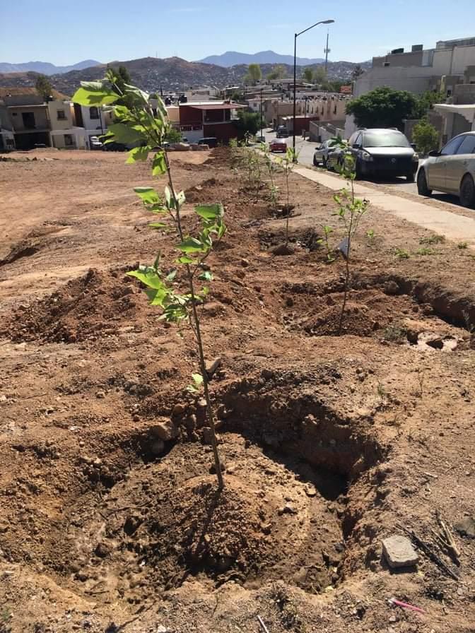 Plantaran 600 árboles en Nogales para cumplir con la Ley de Árbol