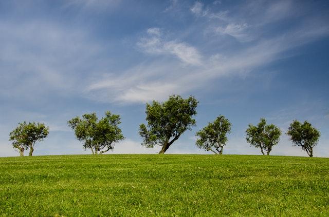 Plantaran 600 árboles en Nogales para cumplir con la Ley de Árbol. Foto de Skitterphoto en Pexels