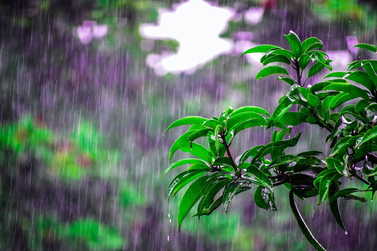 Se degrada Nora a Tormenta Tropical: CEPC. Foto de Bibhukalyan Acharya en Pexels