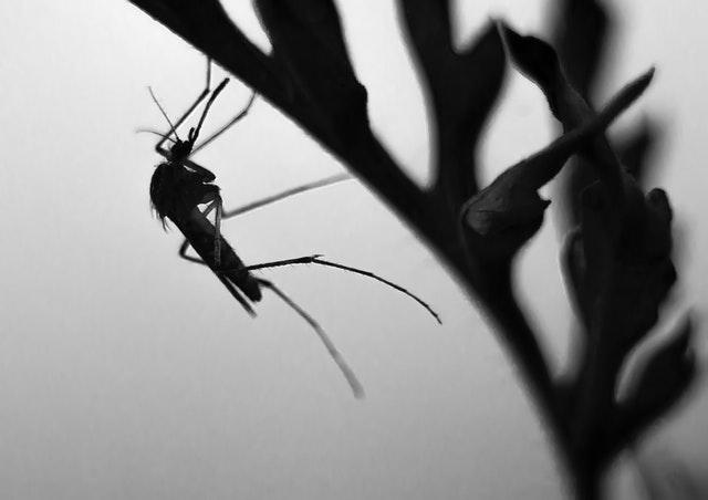 India. Fiebre viral que ha matado a casi 70 personas podría ser dengue. Foto de Laszlo Fatrai en Pexels
