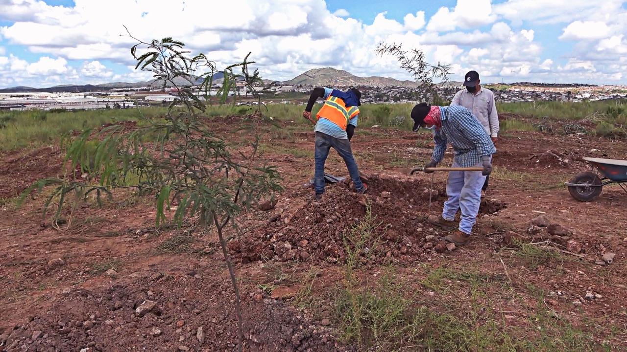 Inicia reforestación en cumplimento de la ley del árbol