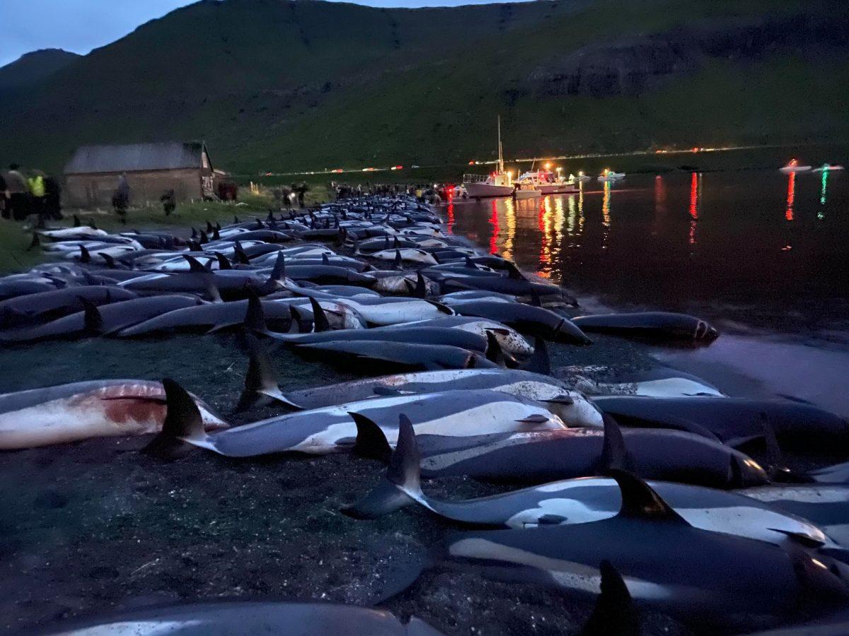 Matanza de delfines. Foto Twitter @AndrewsAbreu