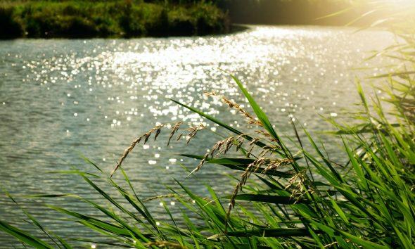 Yaquis controlaran el 50% del agua del Río Yaqui. Foto de Mabel Amber en Pexels