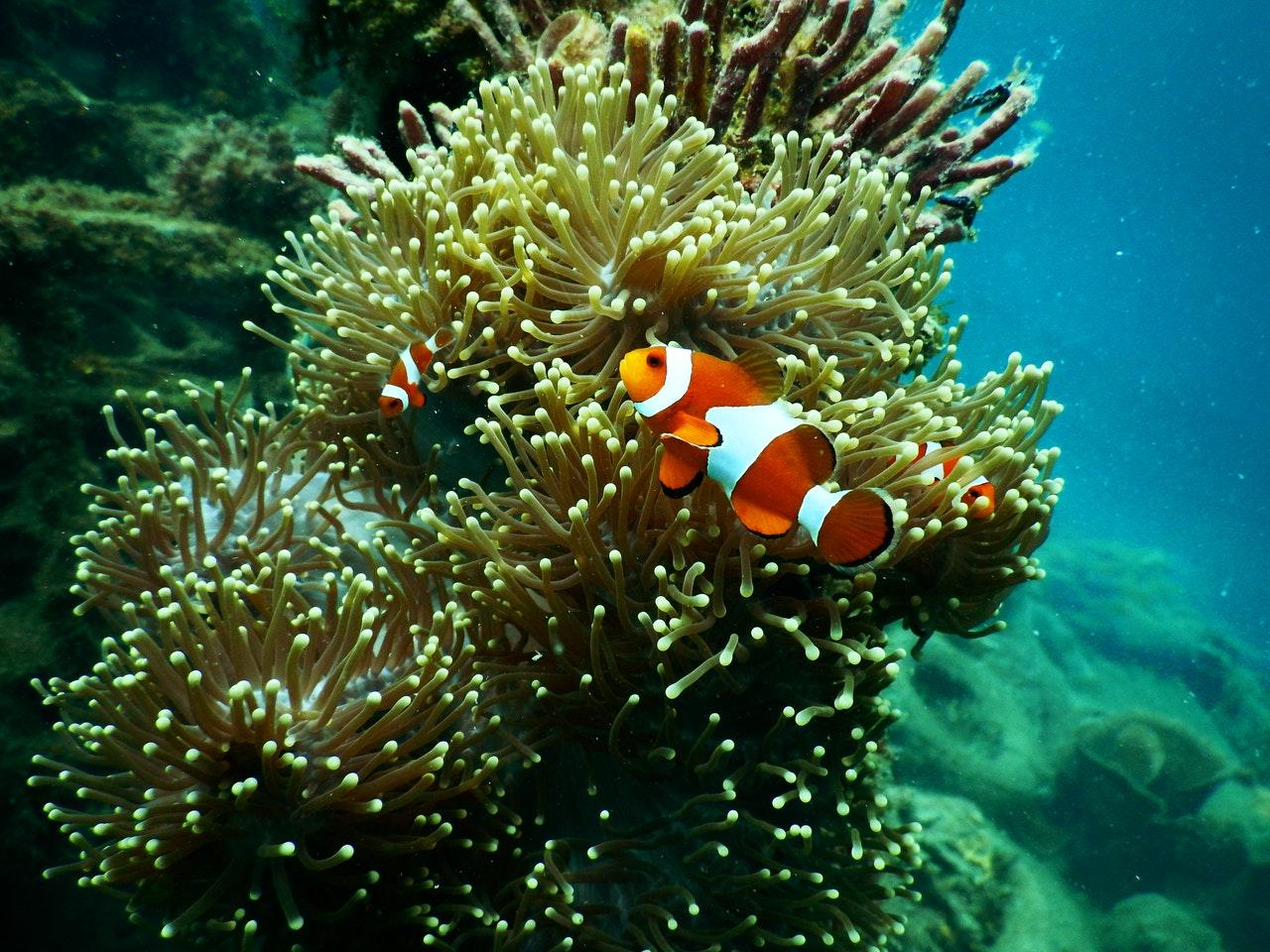 El mundo ha perdido el 14% de sus corales desde 2009. Foto de Tom Fisk en Pexels